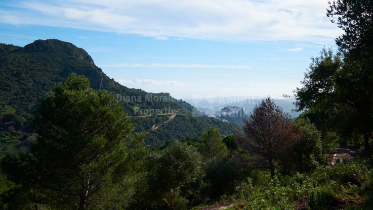 Casares Montaña, Land of 66 hectares in the mountains of the Sierra Crestellina
