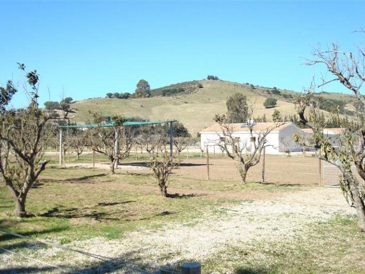 For sale San Martin del Tesorillo finca with 4 bedrooms | Savills Sotogrande