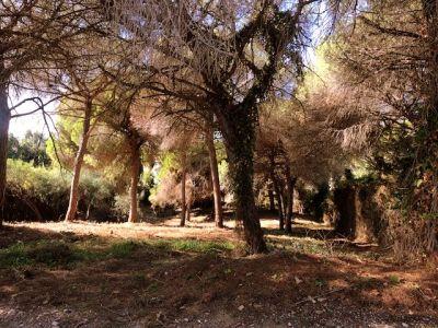 Grundstück mit Westausrichtung in Elviria
