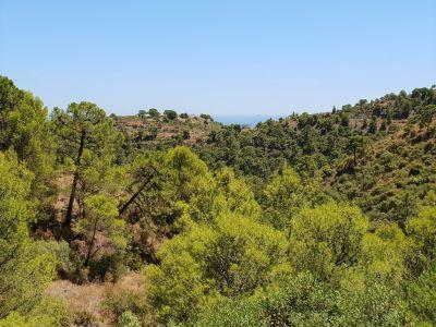 Superb plot in unspoilt nature, El Madroñal