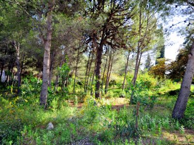 Fantastisches Grundstück zum Bau einer Villa in Cascada de Camóján