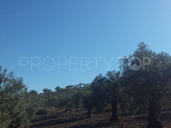 Alora plot | Keller Williams Marbella
