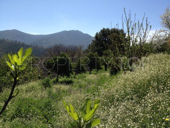 Plot in Jubrique for sale | Campomar Real Estate