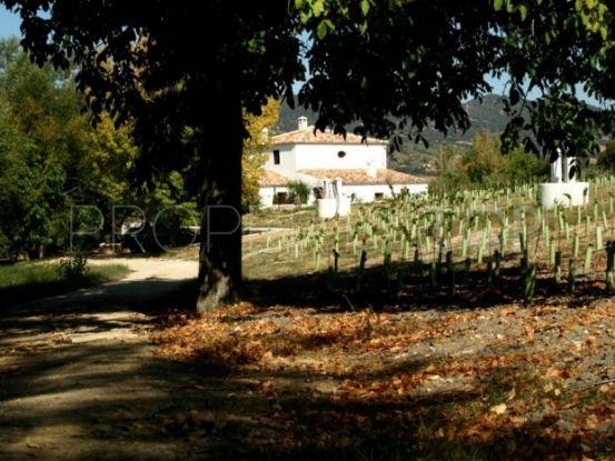 Buy country house in Ronda   Villas & Fincas