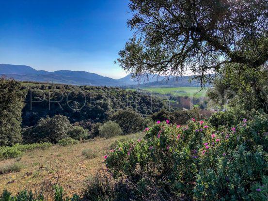 Ronda plot for sale   Villas & Fincas
