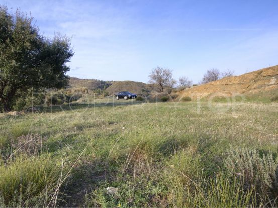 Plot in Monda for sale | Michael Moon