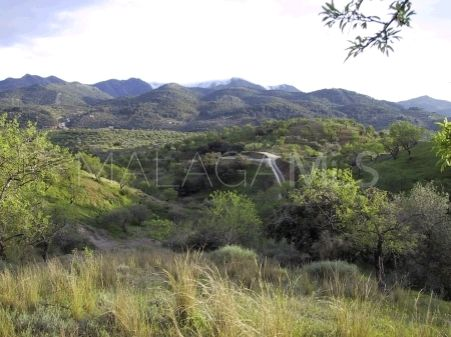 For sale plot in Monda | Michael Moon