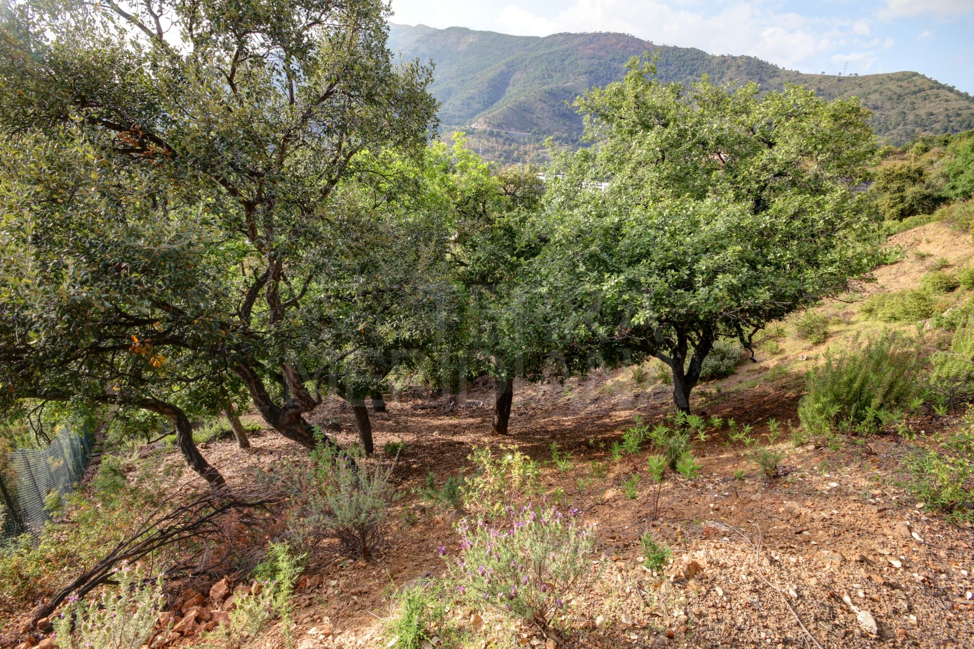 Expansive plot for sale in la Zagaleta, a private luxury estate with 24-hour security