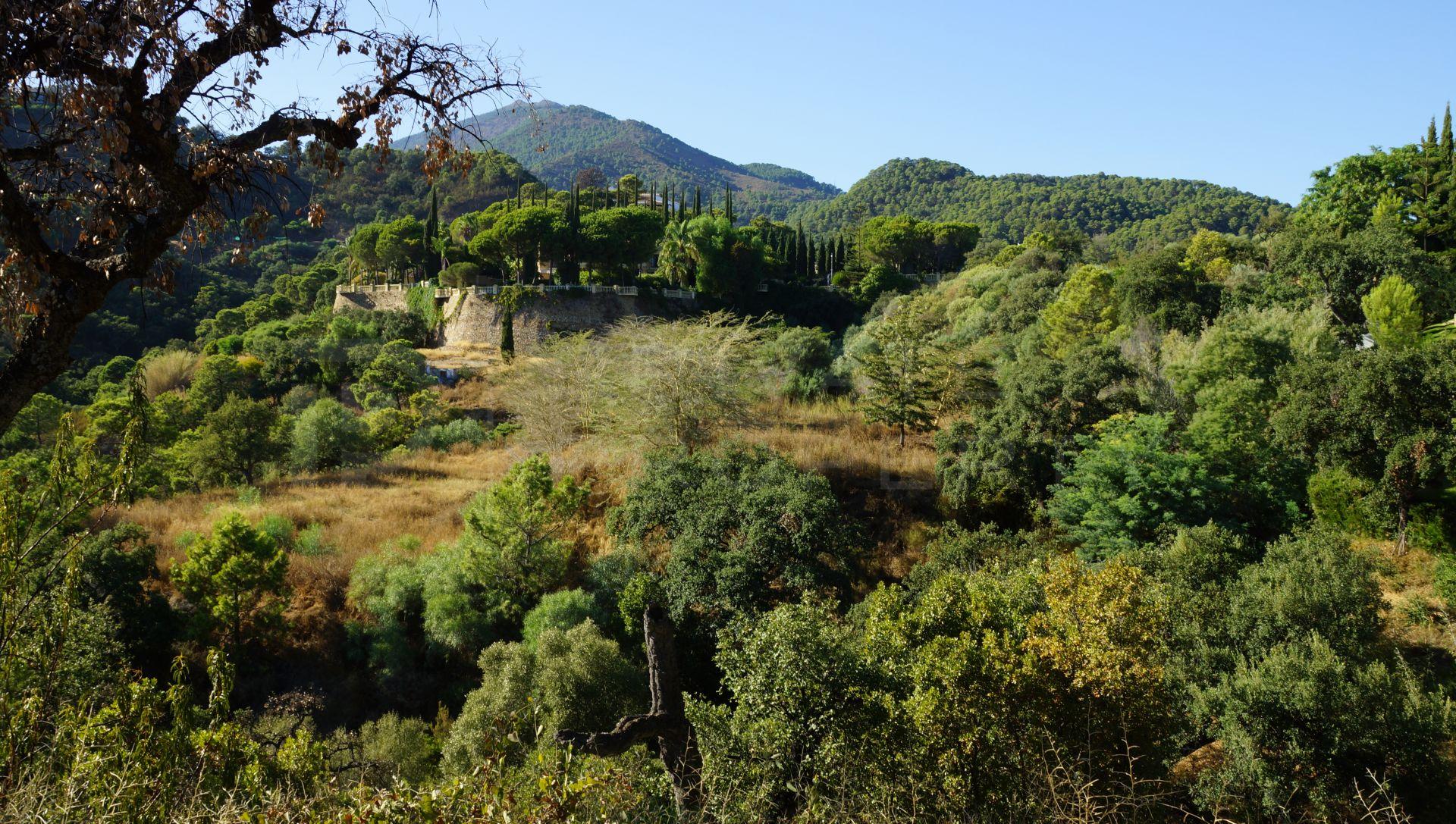 Plot in El Madroñal