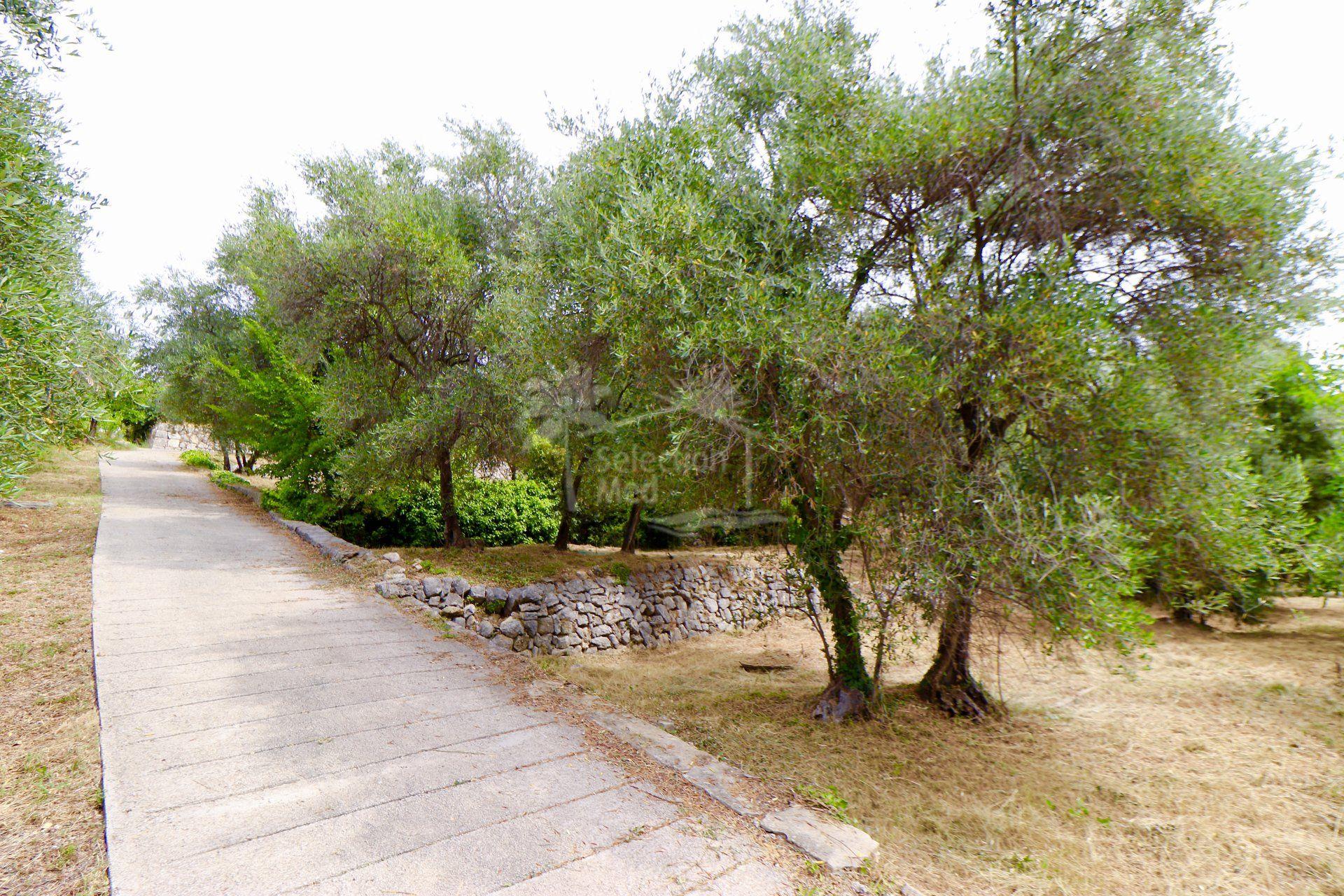 Plot in Grasse