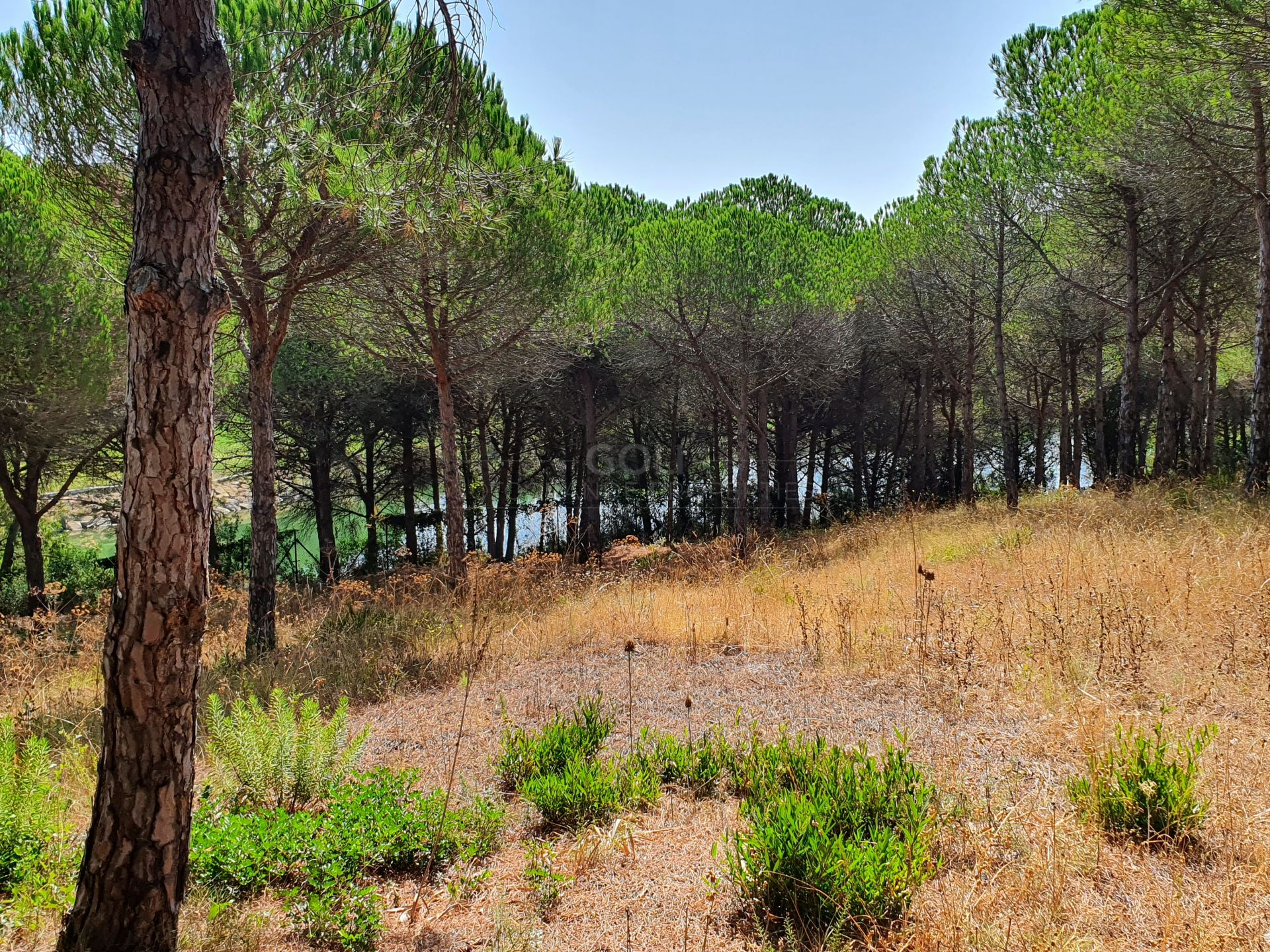 Plot for sale in Sotogrande Alto