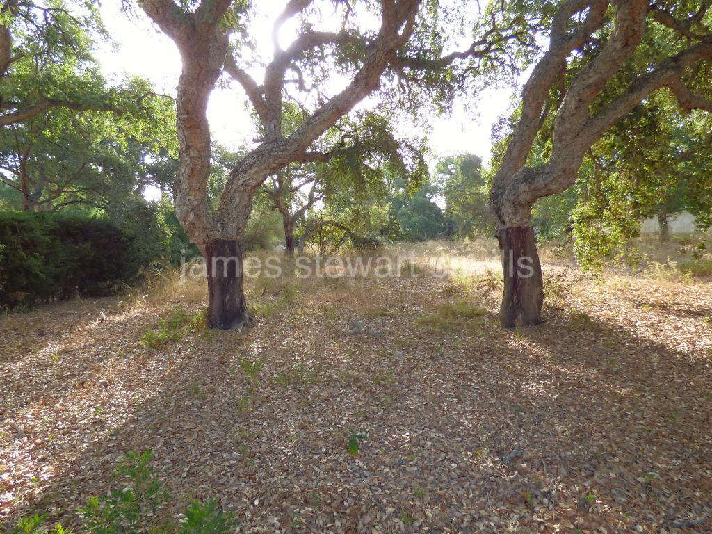Sotogrande, Flat plot in central Sotogrande