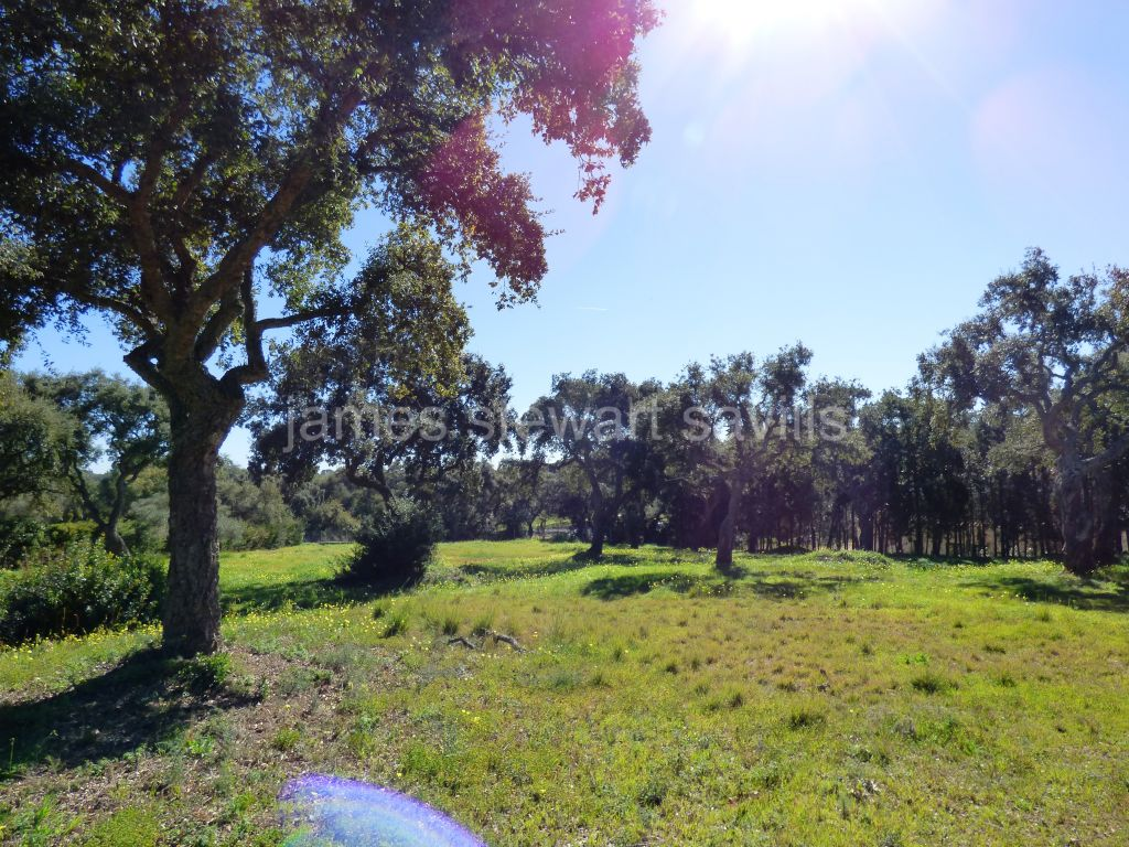 Sotogrande, Wonderful 7644m2 plot frontline to Real Club Valderrama