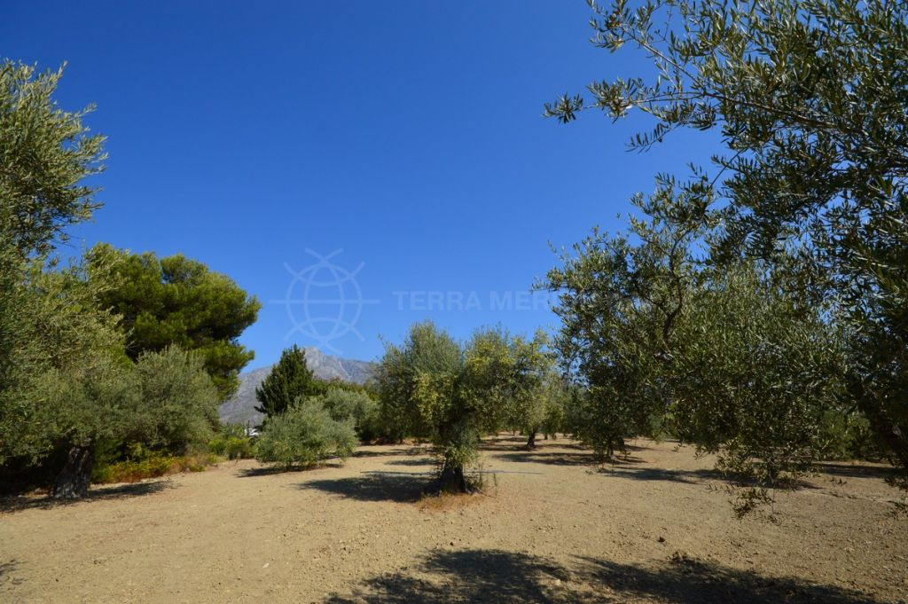 Marbella Golden Mile, One-of-a-kind plot with mountain views for sale in Altos de Puente Romano, Marbella Golden Mile