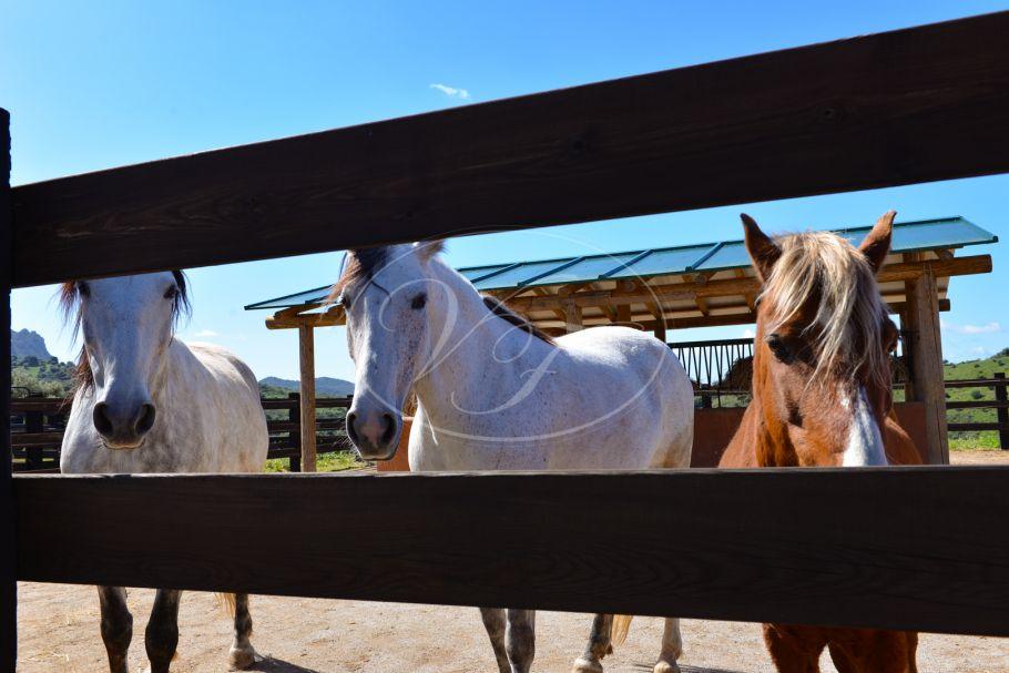 Plot, grondstuk voor bouw paarden stallen project aan de rivier te koop, Casares