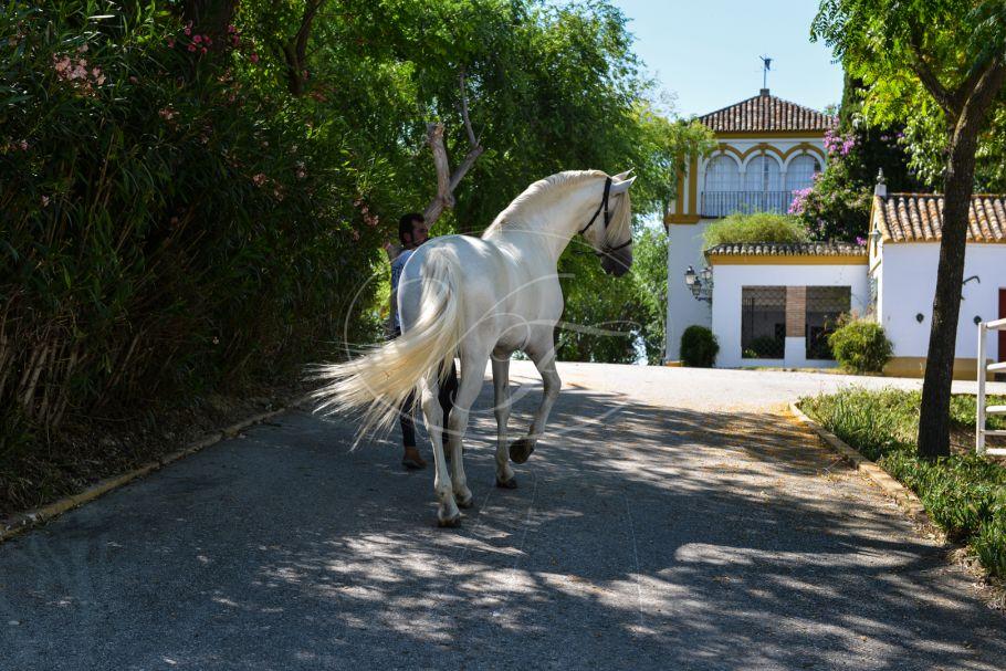 Spectaculaire cortijo met paardenfokkerij, Sevilla