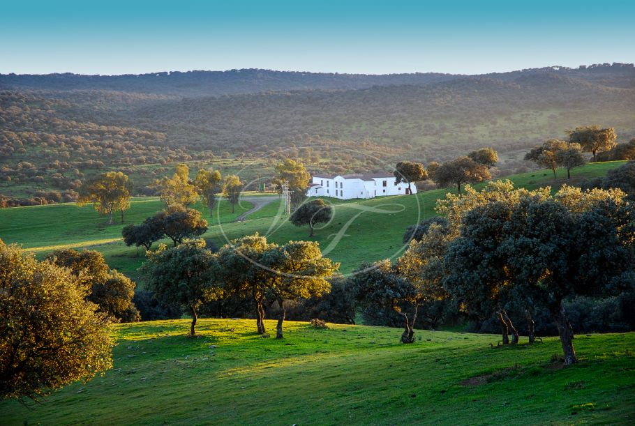 Authentic Cortijo with stunning finca, Jaen