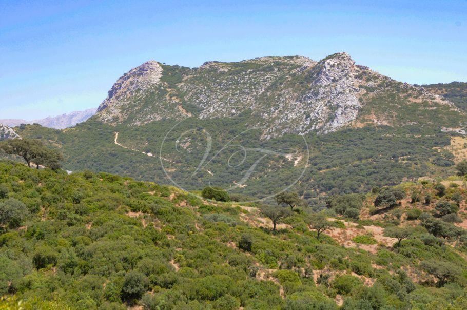 Hunting Estate, Big Game shooting, close to Malaga, Antequera
