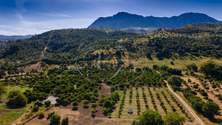 Tranquil Country Estate, Farm, Casares