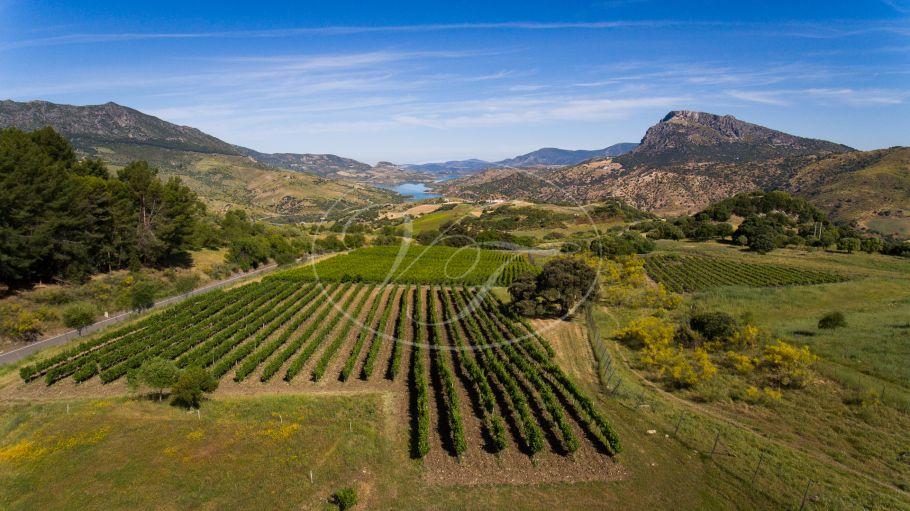 Wijngaard met bodega in Andalusië, Ronda