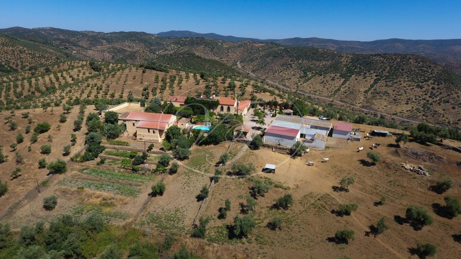 Cortijo with large olive grove, Cordoba
