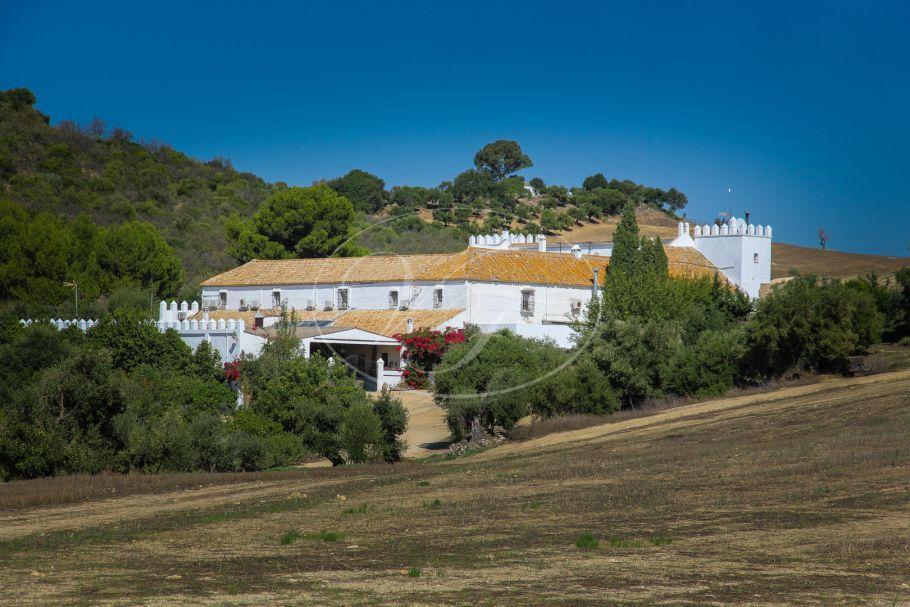 Wunderbares Liegenschaft, Bauernhof mit Olivenplantagen, Arcos de la Frontera