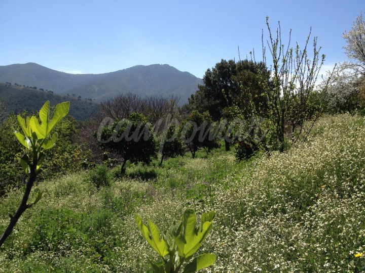 Jubrique, Land for sale in Jubrique, Malaga