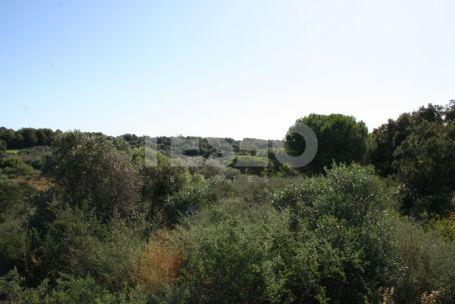 Plot in Altos de Valderrama