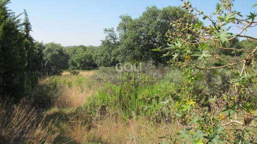 Fenced plot next to Valderrama