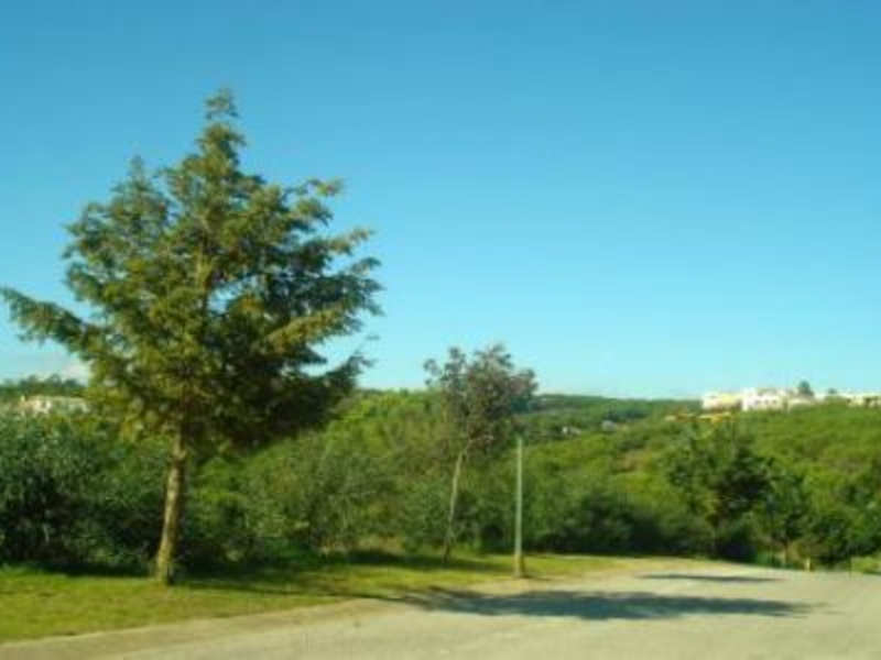 Plot for Sale in Sotogrande Alto, Sotogrande